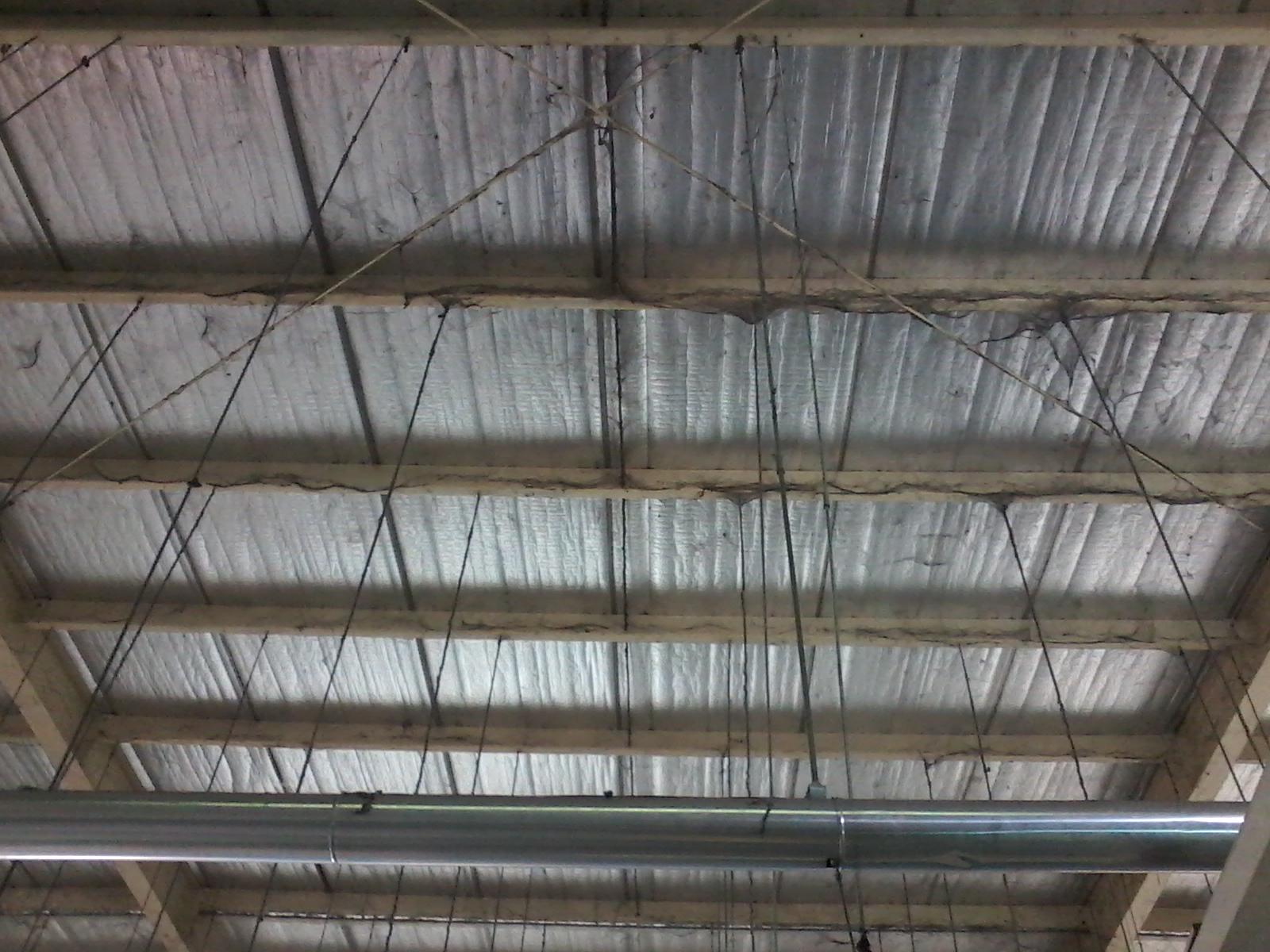 Diệt nhện bám trên trần nhà xưởng